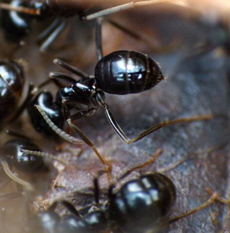 Welche Parasiten im Menschen beim Husten
