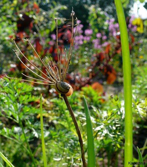 Spinnen Im Garten: Kapuzina: Spinnen Und Nüsse